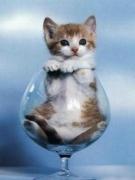 katzeimglas.jpg